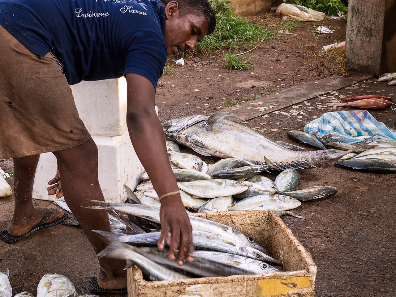 fish_market_sri_lanka3