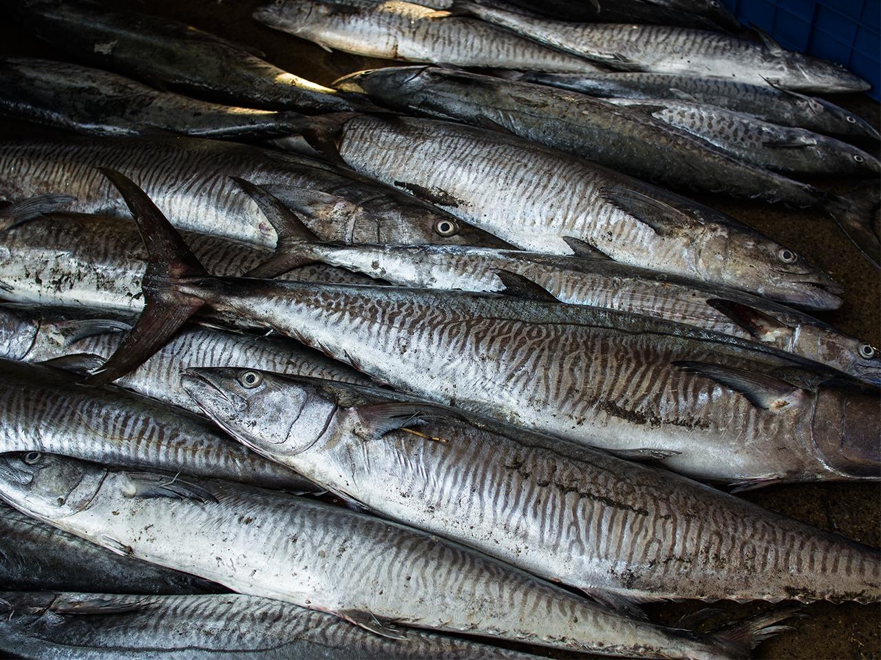fish_market_sri_lanka4