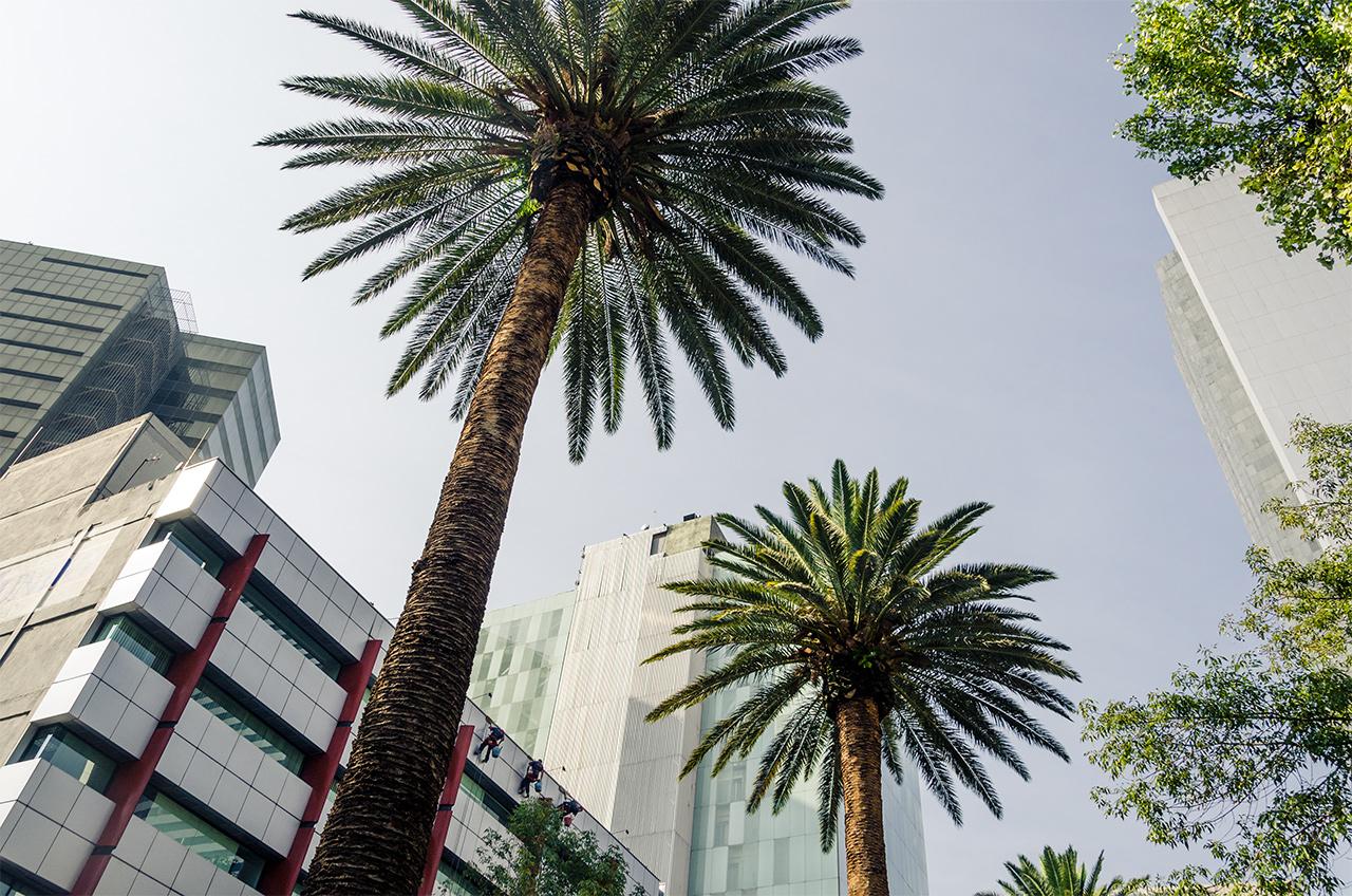 mexiko_city_8