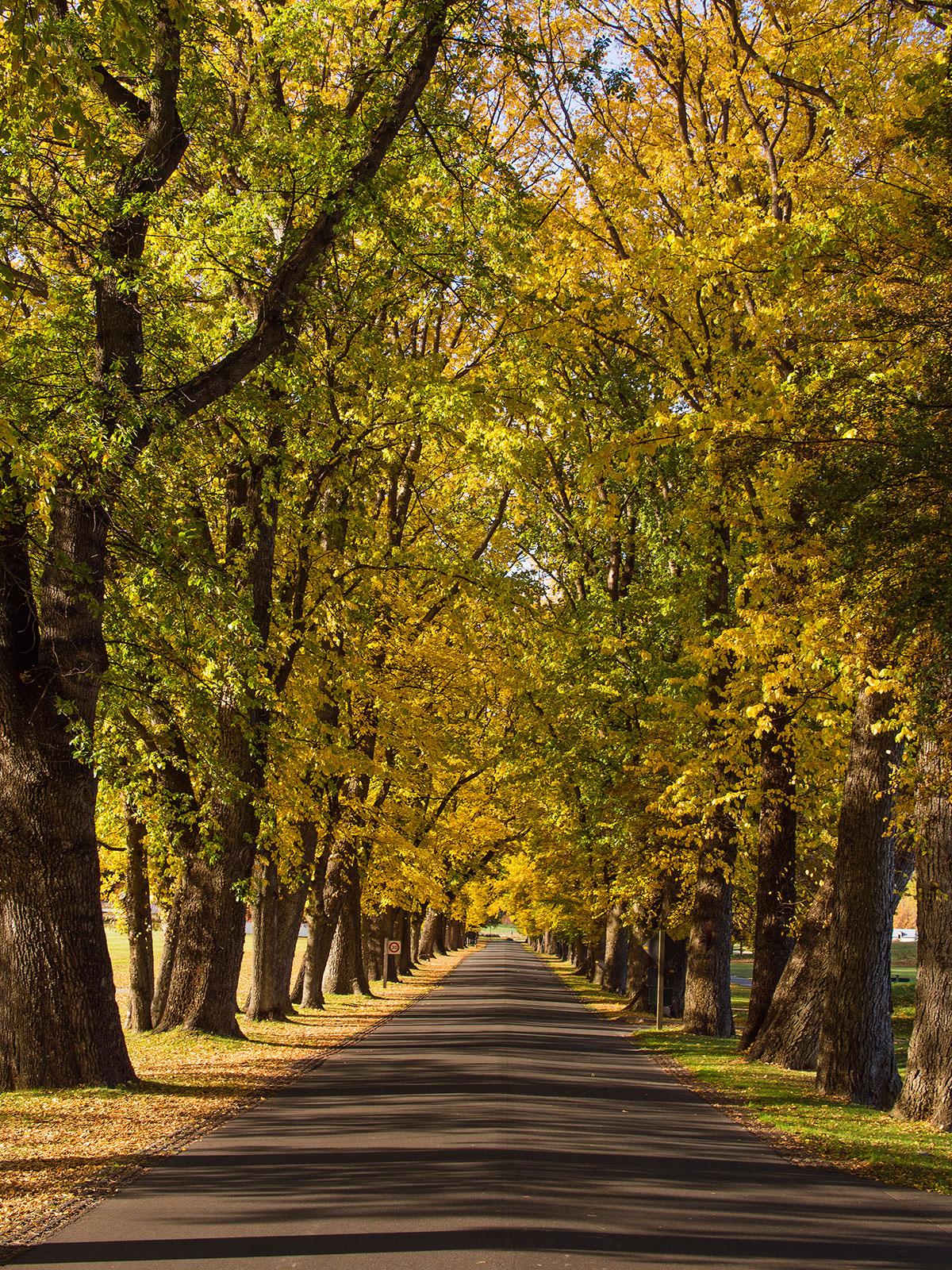 autumn_color_new_zealand_arrowtown_aventue