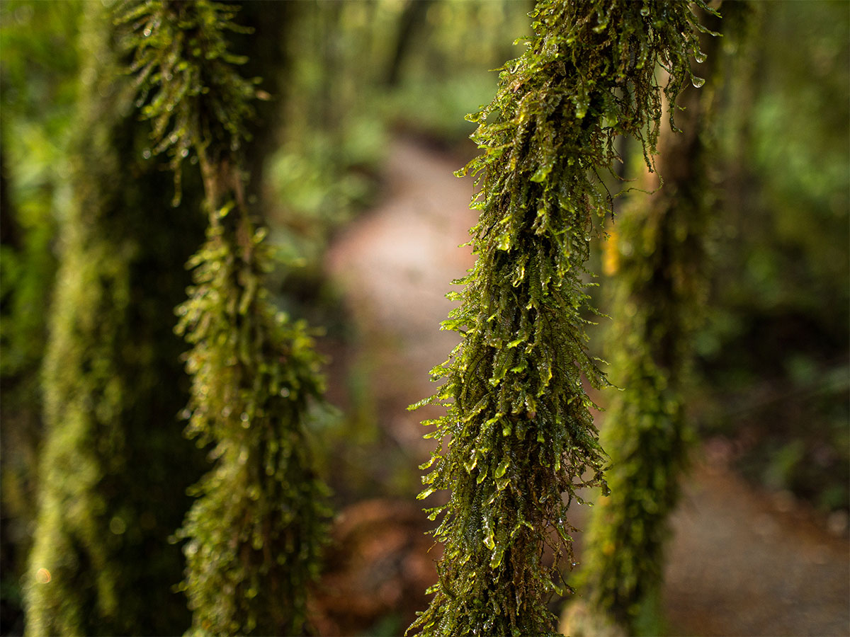 new-zealand-rainforest-detail-kepler-track