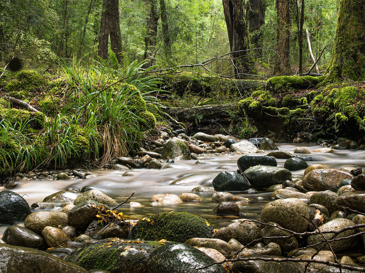 new-zealand-rainforest-river-kepler-track
