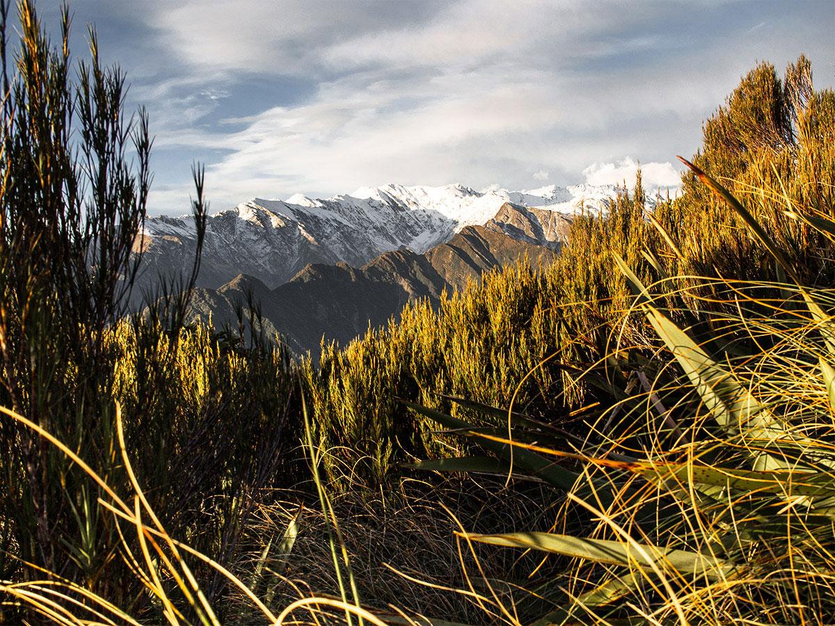 Franz_Josef_Glacier_New_Zealand_mountains4