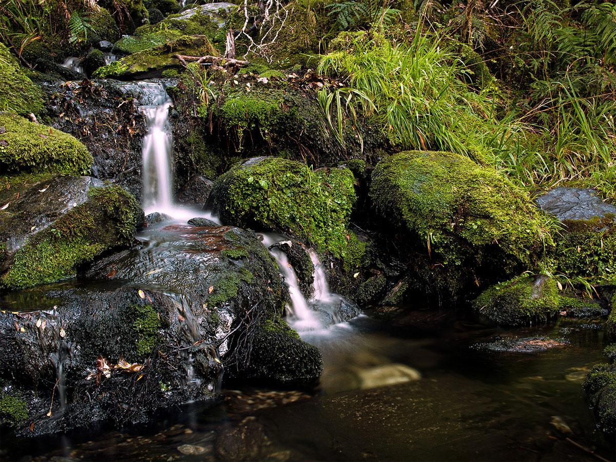 Franz_Josef_Glacier_New_Zealand_waterfall_rainforest