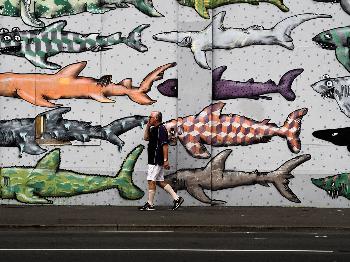 Picture of a shark artwork wall or fish wall close to the  Museum of New Zealand Te Papa Tongarewa Wellington New Zealand