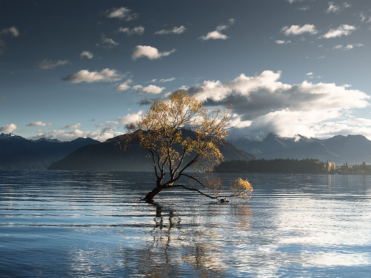 wanaka-tree-lake-wanaka-new-zealand