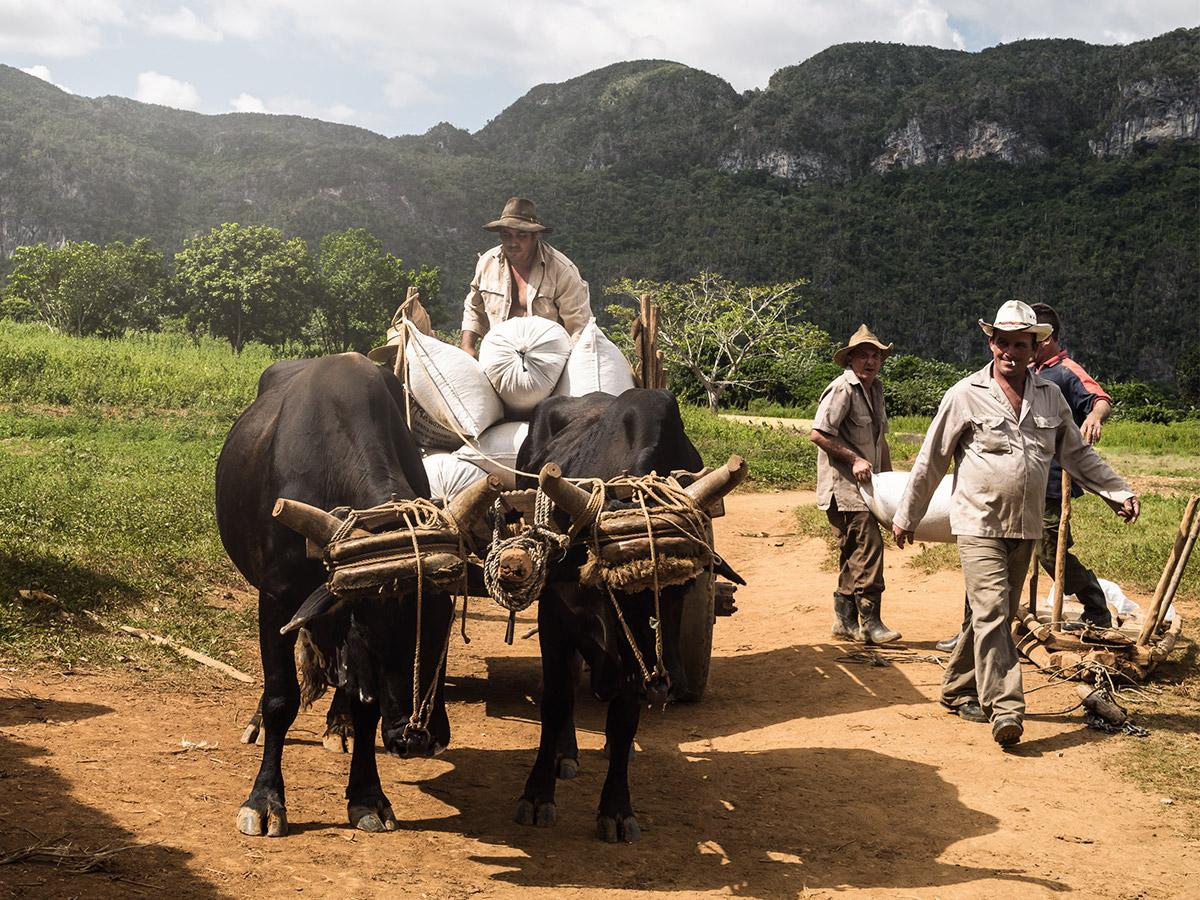 vinales_cuba_farmer_crew