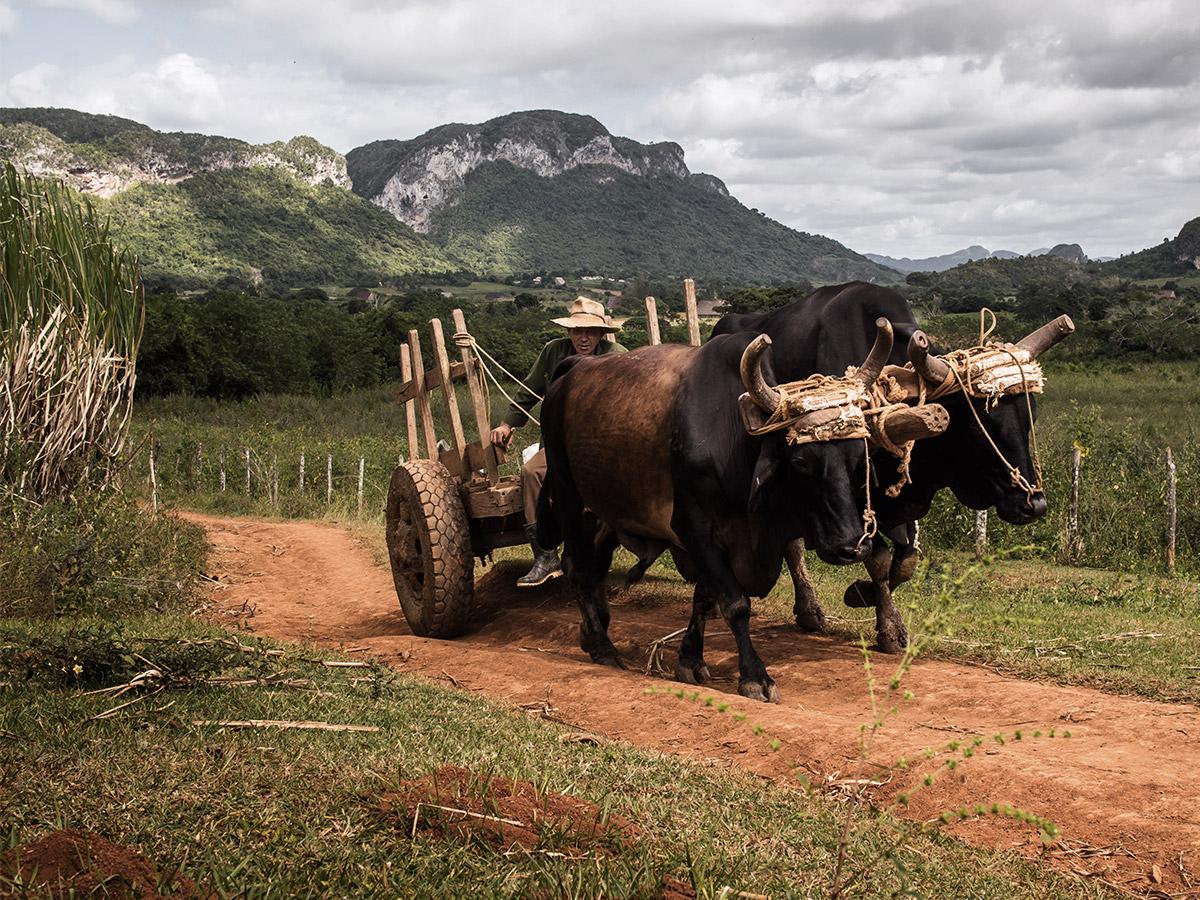 vinales_cuba_farmer_transport