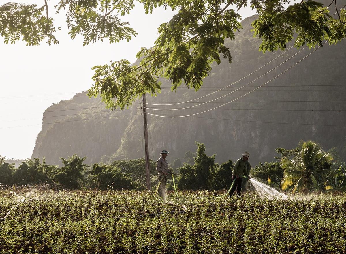 vinales_cuba_farmer_watering