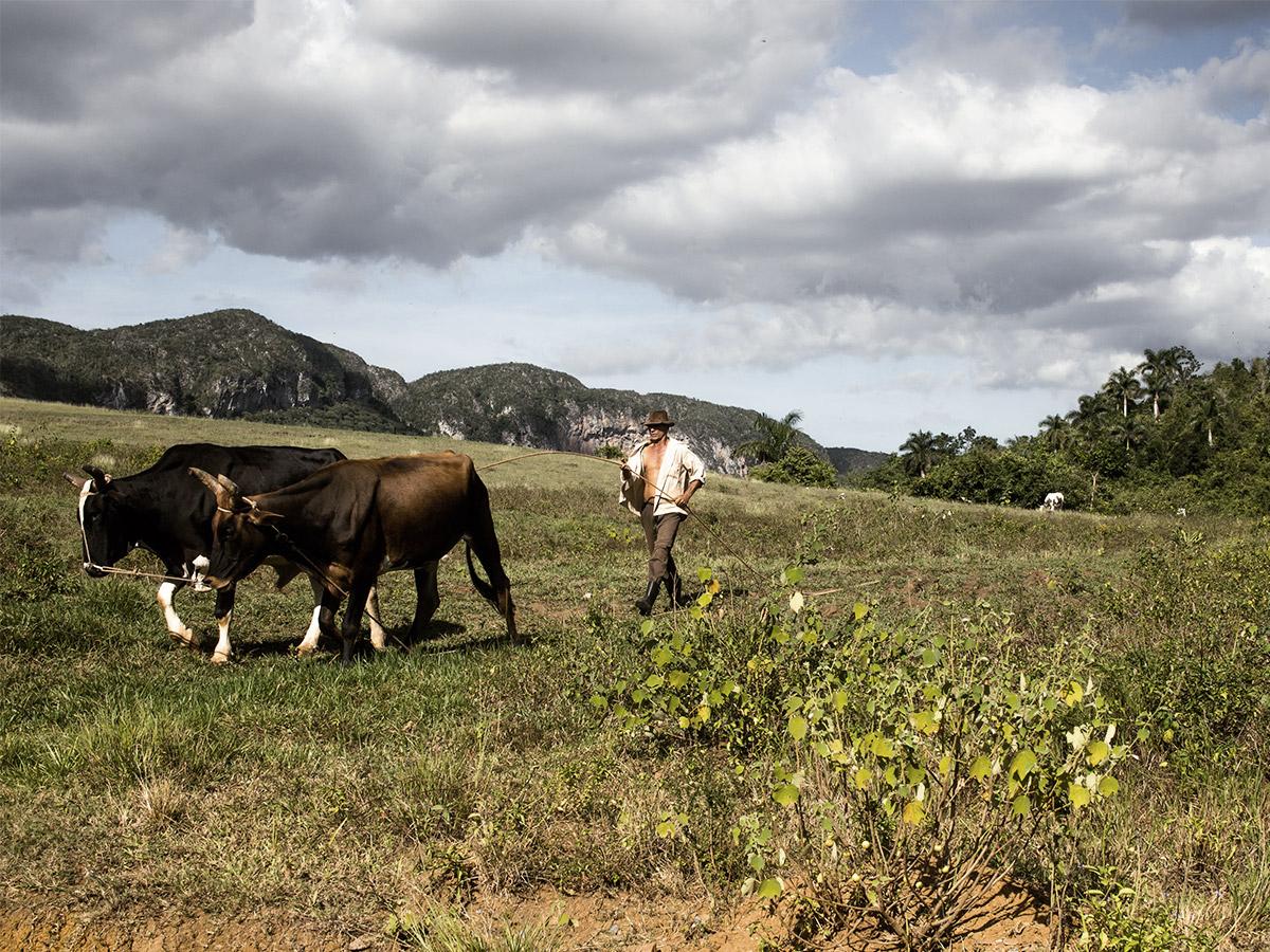 vinales_cuba_farmer_work